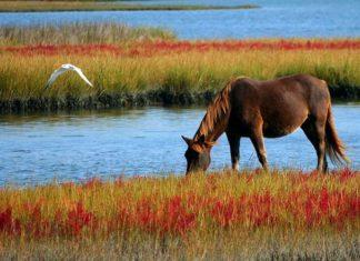 Pasze dla koni – na co zwrócić uwagę przy zakupie?